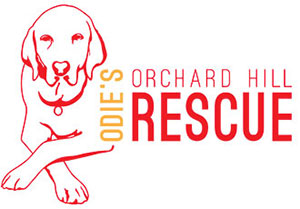 Odie Orchard Hill Rescue